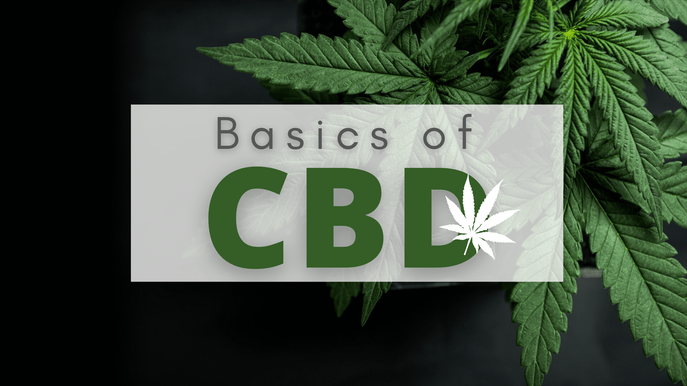 Learn The Basics of CBD [Explained by MMJ Doctor New Jersey] (1)